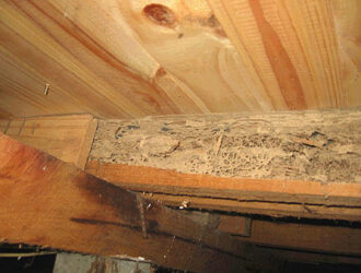 Termite Damage In Timber
